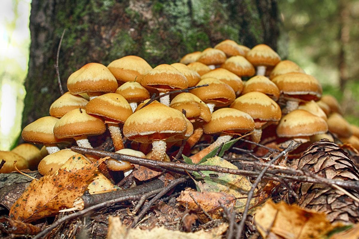 грибы в элите где собирать